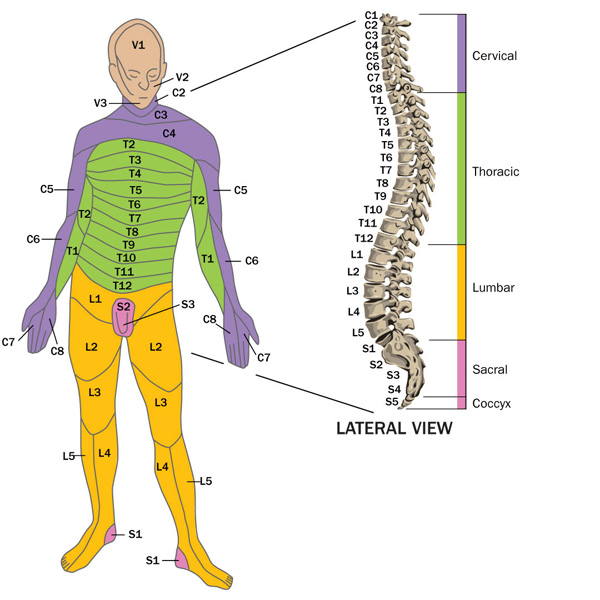 spine-art-affected-areas